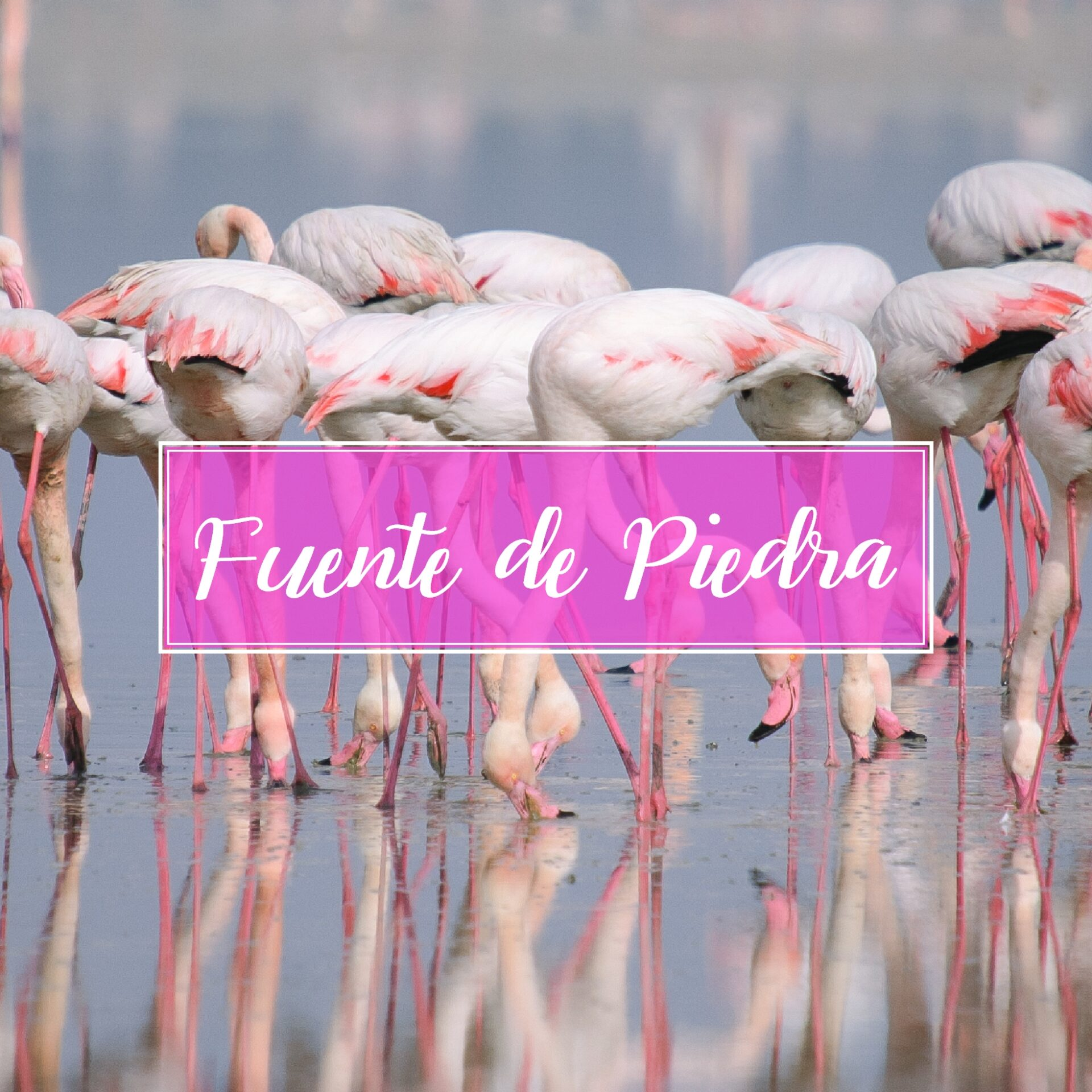 Fuente De Piedra Town Village Malaga