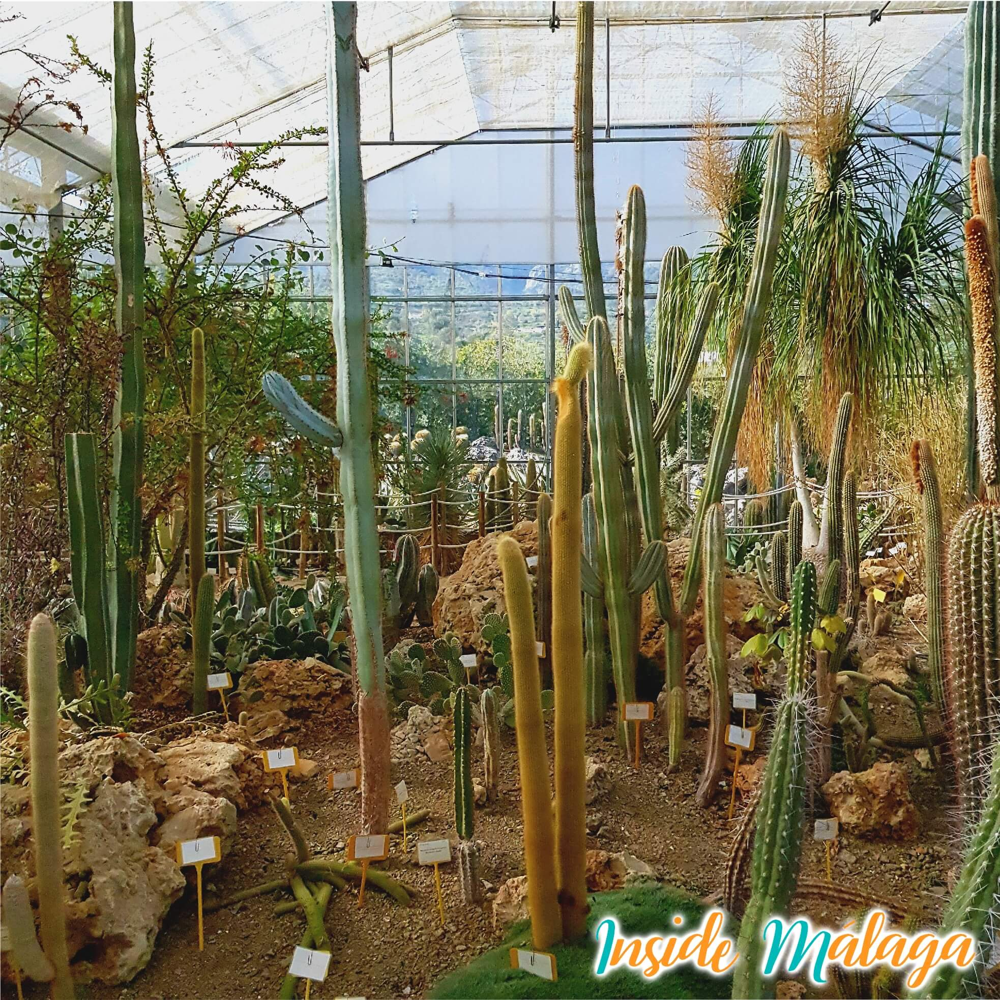 Cactus Garden Casarabonela Malaga